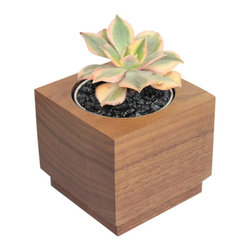 "Aeonium - 3"" Domestic Hardwood Potted Cactus and Succulents - This hip & cool handmade cube is made from solid domestic walnut hardwood which is native to Eastern United States. We have planted an outstanding Aeonium sunburst native to the Canary Islands  to give you a beautiful contrast of green, pink and yellow. Place indoors under bright light. Water only twice a month and avoid spilling when watering. Tung oil or beeswax will help extend the lifespan of your planter and maintain a shiny look."