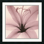 """Amanti Art - """"Lily"""" Framed Print by Steven N. Meyers - Can you dig it? The seeds of this stunning new approach to the classical art of botanical printmaking are sown in the technology of X ray photography."""
