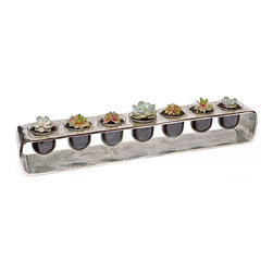 "luludi living frames - Luludi Living Frames Succulent Silver - Our succulent silver terrarium comes with an assortment of succulents bedded in glass cups nestled inside a silver metal base. Perfect for indoor or outdoor tabletop display, event centerpiece or a cheerful windowsill accent, contact us to discuss alternate silver terrarium design with options such as colored sand, marbles, crystals and air plants, available as shown or may be custom-tailored:, dimensions: 4. 5"" width x 4. 5"" height x 29"" length, weight (approx): 8 lbs, living terrariums are unique landscapes so finished pieces may vary, Suggestion for care:, succulents thrive in bright light, confirm soil is dry before watering, keep in mind cacti are potted in a sandy soil sand is powdery when dry and holds together when moist, most cacti use a lot of water during spring and summer and hardly any thru winter"