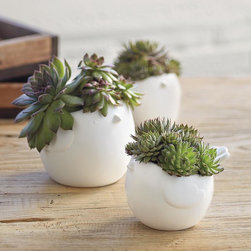 Hen + Chicks Succulents - The Hen + Chick growing kit comes with succulents to grow in the pots. I love these kinds of items with a humorous twist.