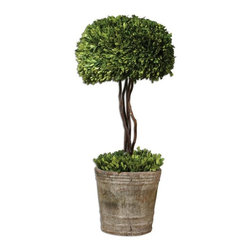 Silver Nest - Topiary - Preserved while freshly picked, natural evergreen foliage looks and feels like living boxwood. Single topiary is potted in mossy stone finished terracotta planter.