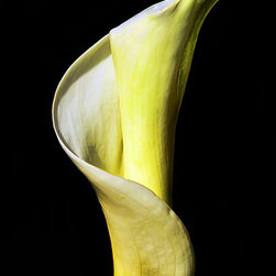 Calzphotography - Create your style - I love the calla lily flower with its soft sensual curves.In this case I choose to photograph a closed calla lily I was drawn to the way the curves of this flower,created an s.