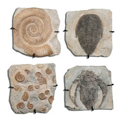 Uttermost - Fossil Plaques Wall Art, Set of 4 - Fossil Plaques Wall Art, Set of 4 by Uttermost. Old fossil replicas with an aged stone finish and black protective hanger.