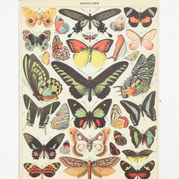 Butterfly Specimen Poster - Pretty tones. Tack it up on a wall next to this mushroom poster and the room has a great vibe!