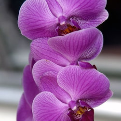 """""""Orchid #1"""" Artwork - The botanical bliss this orchid photograph creates is one you'll want to bask in all the time. With this stunning shot by Thurston Howes on your wall, you'll love having an orchid that is always in bloom."""