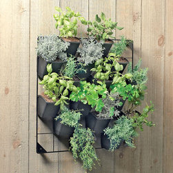 Vertical Wall Garden - Short on space? A vertical wall garden may be your answer for growing kitchen herbs, succulents and flowers. This set comes with a mountable grid and recycled pots. The pots get clipped onto the grid and you can configure them as you'd like. This would be a great gift for a cook who wants to grow his or her own fresh herbs and have them all within easy reach.