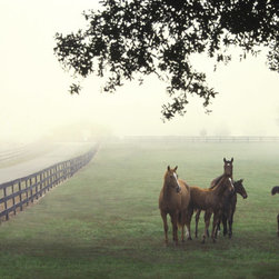 Murals Your Way - Horse Farm Wall Art - In the morning mists, horses gather along the fence line of a green pasture