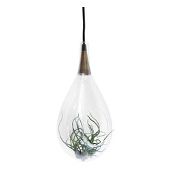 Large Signature Hanging Terrarium Pendent Lamp - Bringing the outdoors in is something we all strive to do but it can be difficult to accomplish. This one of a kind water-drop blown-glass and brass pendent lamp stylishly delivers while maintaining a clean polished look. Each lamp displays a live, growing air-plant bringing both light and life to your living space. One is enough to set-off any area of your home while a grouping can create dramatic results. If you're concerned you don't have a green thumb, these exotic plants require very little maintenance and we'll send along a few pointers with your purchase.