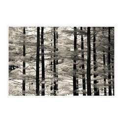 """Ana V Ramirez Framed Print, Into the Woods, No Mat, 28 x 42"""", White - Black and white offers the perfect medium for these tall trees, with dark trunks standing in stark relief against their many branches full of ephemeral leaves. Photographed at Valley Forge Park in Pennsylvania. 11"""" wide x 13"""" high 16"""" wide x 20"""" high 28"""" wide x 42"""" high Alder wood frame. Black or white painted finish; or espresso stained finish. Beveled white mat is archival quality and acid-free. Available with or without a mat. {{link path='shop/accessories-decor/pb-artist-gallery/artist-gallery-ana-ramirez/'}}Get to know Ana Ramirez.{{/link}}"""