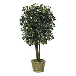 Oriental-Décor - 6' Ficus Artificial Tree - Towering at 72 inches, this 6 foot Ficus Artificial Tree is as real-looking as a live Ficus plant. It is created using silk and polyester and features four trunks with a total of 2,000 leaves. All these combine to produce a synthetic decorative plant that looks authentic even when viewed up close. A beautiful wicker basket holds the plant, giving it a polished look perfect for interior decorating. Ficus trees, which are a species of the Fig tree, are known to be the official tree of Bangkok. With its elegant branches and shiny leaves, it has become a popular choice as a house plant. Real Ficus trees are usually potted and used as decorative plants indoors, but for homeowners that appreciate convenience, artificial Ficus trees are a great next choice. With this 6 foot Ficus Artificial Tree, you need not worry about seasonal maintenance or regular watering, pruning and fertilizing. You can stop worrying about plant pests, too!