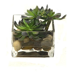 Creative Branch - Succulents in glass Container - Quality Product