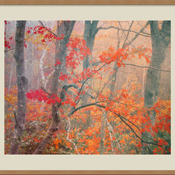 Amanti Art - Maple Trees in Fog Near Eagle Lake, Acadia National Park, Maine, Framed Print - With his talent for capturing nature's richest tones and softest hues, award-winning landscape photographer William Neill shows us the autumnal glory of maple trees of Acadia National Park.