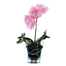 Jane Seymour Botanicals - Phalaenopsis Orchid in Glass Vase - Pretty in pink — and you can count on it staying that way. Regardless of your gardening talents, you can enjoy splendid year-round bloom with this realistic, no-fuss Phalaenopsis orchid in a glass vase.