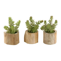 D&W Silks - D&W Silks Flocked Burro Tails In Natural Wooden Planter - Set Of 3 - Flocked burro tail in natural wooden planter