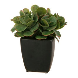 "Winward Designs - Succulent Plant 7.5"" - Use greenery around your house for good feng shui. Our realistic faux plants can give your home added beauty without the hassle of regular watering and care-taking."