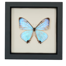 Contemporary Decorative Accents by Bug Under Glass