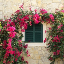 Flower Window Mural Medium - Let your garden in while keeping mother nature out with our flower window mural. Our removable canvas wallpaper has no paste and leaves no mess. Apply yourself again and again.