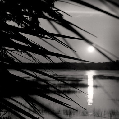 The Andy Moine Company LLC - Sunset in Hilton Head South Carolina Fine Art Black & White Photography, 16x24, - Black and White Fine Art Photography captured with 35MM Ilford Film and reproduced in Limited Editions on Canvas OR Brushed Aluminum. This is a beautiful Long Lens composition of the Sun setting through some Palmetto Trees at Sheltered Cove on Hilton Head Island, South Carolina.