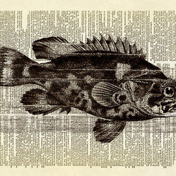 Altered Artichoke - Ocean Fish Dictionary Art Print, Sepia - This print features a beautiful antique illustration of an ocean fish with a spiky dorsal fin. Lovely detail on this drawing.