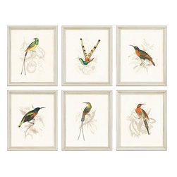Paragon Decor - Hummingbirds Set of 6 Artwork - Colorful birds are aged and framed in classic silver wood.