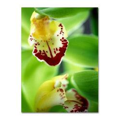 Trademark Fine Art - Kathy Yates 'Cymbidium Seafoam Emerald Orchid' Canvas Art - Artist: Kathy YatesTitle: 'Cymbidium Seafoam Emerald Orchid' canvas artProduct type: Giclee,gallery wrapped