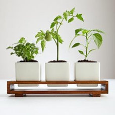 Modern Plants by RedEnvelope