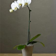 Asian Plants by Splendid Willow