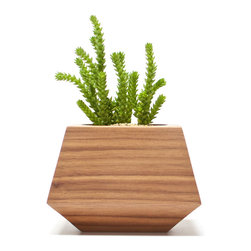 Revolution Design House - Boxcar Single, Walnut - The Boxcar Singles are made from solid Walnut wood with a clear finish. This small succulent planter makes a big impact as a table centerpiece, on a desk or in the window.