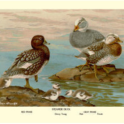 Buyenlarge - Steamer Ducks 12x18 Giclee on canvas - Series: Birds - Ducks