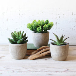 Shelf Ready Succulents - Set of 3 - Get the look of succulents without getting your hands dirty. These three mini pots are filled with artificial succulents—two sedums and a mini aloe—so that you can grab that Southwest style without any water at all.