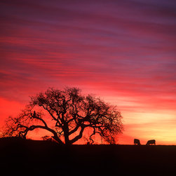 Murals Your Way - Country Sunrise Wall Art - A gnarled old tree stands in silhouette on a hilltop against a showy sky painted pink and purple by the setting sun