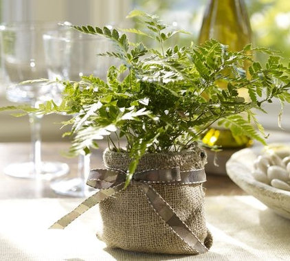 Indoor Pots And Planters by Pottery Barn