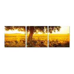 Elementem - African Sunrise Wall Art | Elementem - Design by Elementem Photography. African Sunrise has a vibrancy and luminosity that brings the outdoors inside. A photograph spread across three panels of a tree backlit by the sunrise, African Sunrise will have you believing you can feel the warm sun and breeze on your face. The yellows and browns of African Sunrise are perfect accents to a brown themed room that needs a color boost. African Sunrise is digitally printed on vinyl then mounted onto solid, wooden MDF frames and covered with a thin layer of laminate that allows the print to be easily cleaned with Windex and water. All the wall hanging materials needed for installation are provided. Suitable for contract projects. Available in three size formats.Elementem Photography is a proud member of 1 Percent for the Planet, a group of businesses that have committed to donating 1 percent of their sales towards environmental causes.