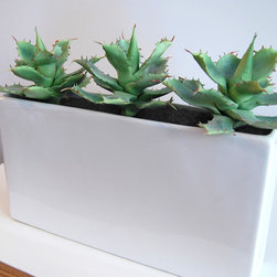 LushModern natural accents for urban living - You don't need a green thumb to care for these artificial dwarf agave. They look so real—complete with natural flaws—that they make the grade for LushModern. Paired with our glossy white ceramic planter, their modern look elevates any apartment or office.