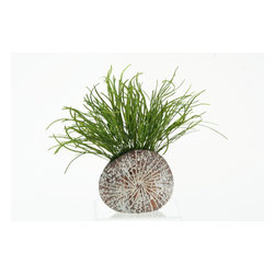 "D&W Silks - Artificial Pearl Grass in Splattered Mocha Sanddollar Planter - It's amazing how much adding a plant can change the look of a room or decor, but it can be difficult if your space is not conducive to growing plants, or if you weren't exactly born with a ""green thumb."" Invite the beauty of nature into your home without all the upkeep with this maintenance-free, allergy-free arrangement of artificial pearl grass in a splattered mocha sanddollar planter. This is not a living plant."