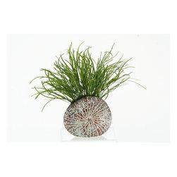 D&W Silks - D&W Silks Pearl Grass In Splattered Mocha Sanddollar Planter - Pearl grass in splattered mocha sanddollar planter
