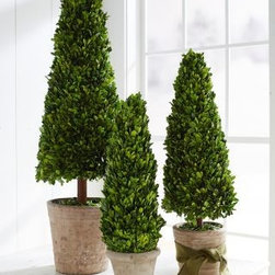 Garnet Hill - Topiary Cone Tree - Reminiscent of Roman times; natural boxwood topiary trees lend a romantic feel to doorways and walkways. When dressed in lights, they make lovely alternative to  traditional holiday trees. Whitewashed hand-packed clay pot. Small: 24 in. H Medium: 30 in. H Large: 43 in. H.