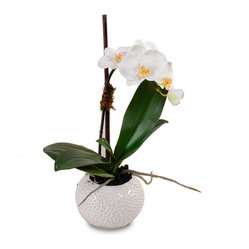 Single Stem Orchid in White Pot