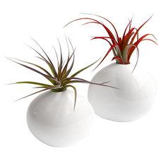 Modern Plants by LushModern