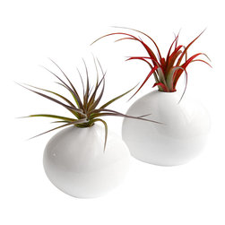 LushModern - LushModern Pebble Airplant Duo - Simple, modern and organic, these airplant vases will add a quiet elegance to your table or mantle. Air plants are one of nature's minimalist designs, deriving nutrients from the air with no potting soil required. The two vases are simply filled with smooth white river stones, and are shaped to look the same. Just spray the plants with the included water bottle for clean, easy care.