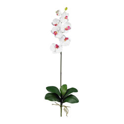 Nearly Natural - Nearly Natural Phalaenopsis Stem (Set of 12) in White - Majestic in stature, yet delicate in form, this beautiful Phalaenopsis Orchid personifies exactly why orchids are so sought after. The crisp green stalk bursts forth from a leafy base and stands straight as an arrow, while the delicate blooms lightly grace the plant's upper echelons. Available in several colors, these beautiful orchids make a perfect gift.