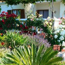 Mediterranean  my garden