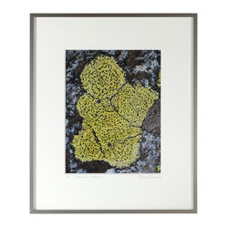 Lost Art Salon - Ch̩rubin, Mendocino 2012 Original - Botanical beauty at its finest thrives in this close-up photograph of green lichen on granite. This mossy fabulous shot, by contemporary artist, Gaétan Caron, will bloom in your home, adding greenery to your wall in the best possible way.
