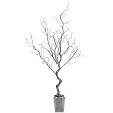 Modern Plants by Z Gallerie