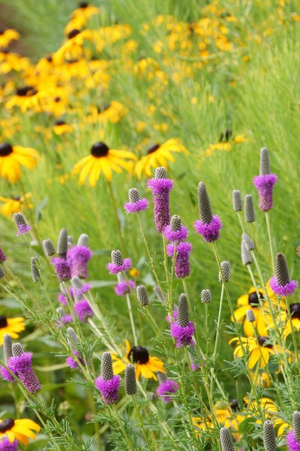15 native flowers that feed native bees for Adam woodruff garden designer