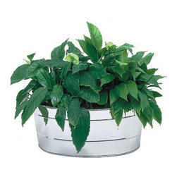 Oval Stainless Steel Planting Tub - The Oval Stainless Steel Planting Tub is a dressed-up version of traditional galvanized farm pails.This tub will retain its shiny stainless finish even in the harshest climates. Equipped with convenient side handles, this tub is great for a variety of uses. Fill with ice for chilling beverages, or use to hold potted plants. Drainage holes should be drilled for direct planting.About ACHLA DesignsThis item is created by ACHLA Designs. ACHLA is a garden accessories company that emphasizes unique wood and hand-forged, wrought iron European furnishings for the home and garden. ACHLA Designs continues to add beautiful and unique items year after year, resulting in an unusually large product line. All ACHLA products are stocked in the company's warehouse for year-round, prompt shipping. ACHLA Designs takes great pride in offering exceptional products and customer service.