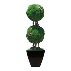 """Double Moss Ball Bonsai - This 50"""" Double Moss Ball Bonsai tree has two moss balls (approximately 16"""" and 14"""") infused with bonsai wood. Add the medium black azar to complete this zen look."""