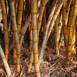 Magic Murals - Bamboo Plant Wallpaper Wall Mural - Self-Adhesive - Multiple Sizes - Magic Mural - Bamboo Plant Wall Mural