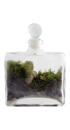 Twig Terrariums - Tropisma DIY Kit - Tropisma DIY Kit contains everything you need to create your own little green world. The 40% recycled glass bottles shape creates a perfect viewing area and is sure to draw attention. We label this kit as intermediate because the opening is not large enough for your hand so you have to use a stick (included) to push the innards in. Really though, it's not hard. Figures may vary, but we promise they're all adorable.