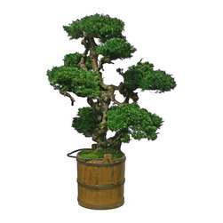 """Vintage Senshi Bonsai - This 48"""" Senshi Bonsai takes on a new look with its wooden vintage bucket. Uniquely made with preserved juniper and beautifully sculpted grapewood."""